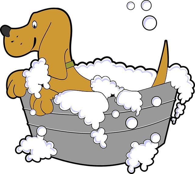 dog-grooming-rhode-island-ri