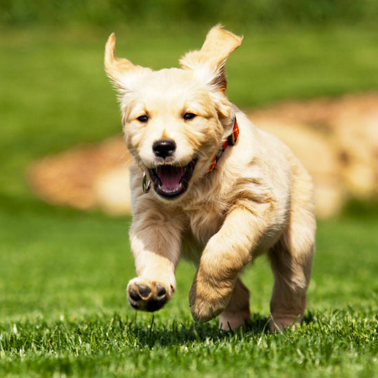 Dog Daycare In Ri Doggie Day Care